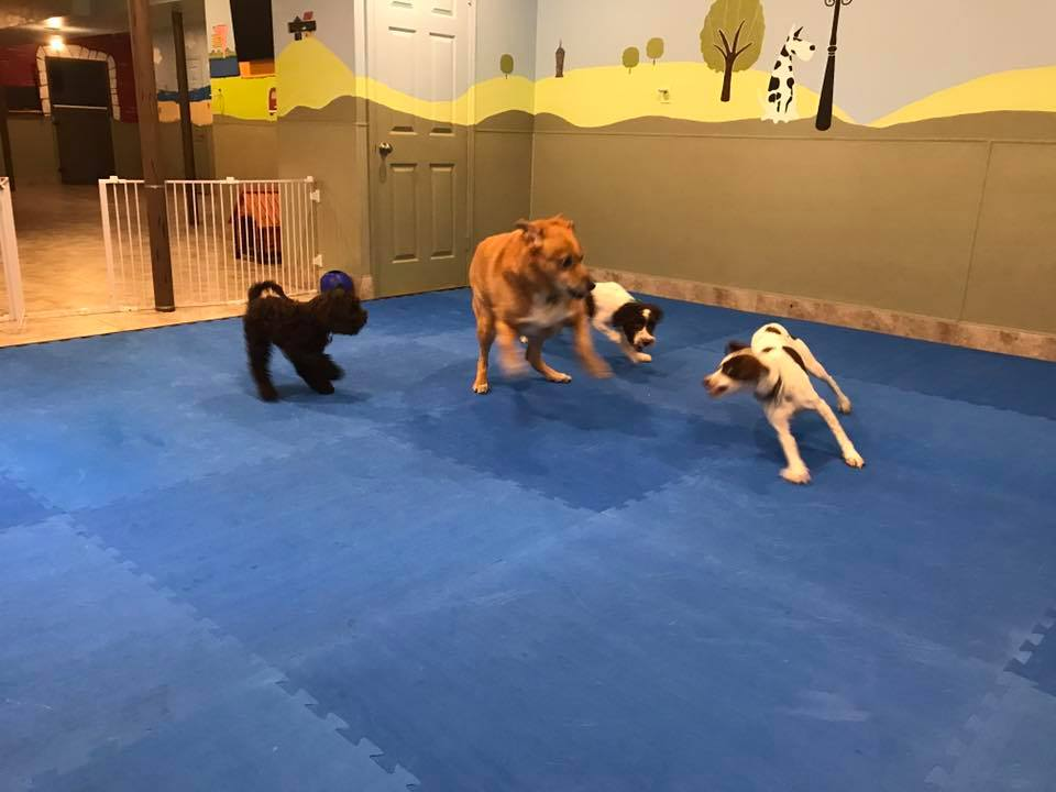 camp ruff ruff play group