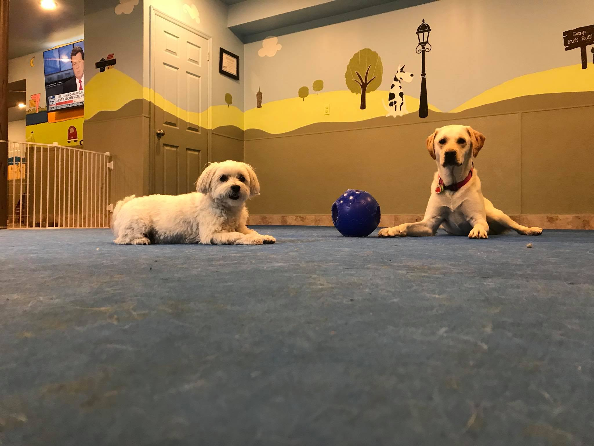doggie residence