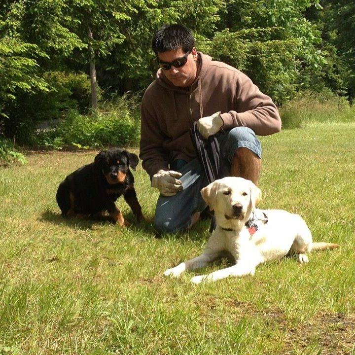 dog training forum